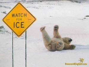 funny-polar-bear-pic-img121