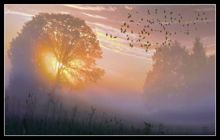 misty_birds