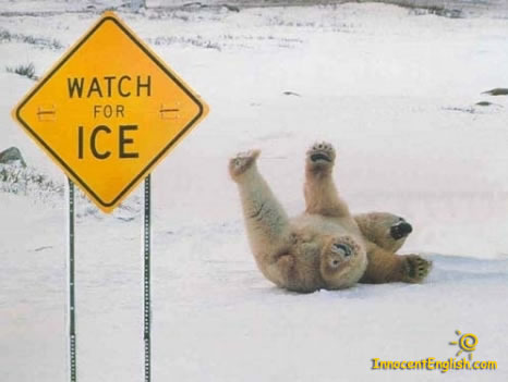 http://ladyfi.files.wordpress.com/2009/02/funny-polar-bear-pic-img121.jpg