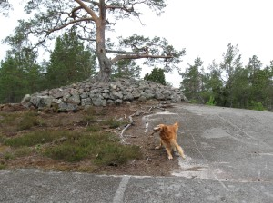 Dog_grave_dancing