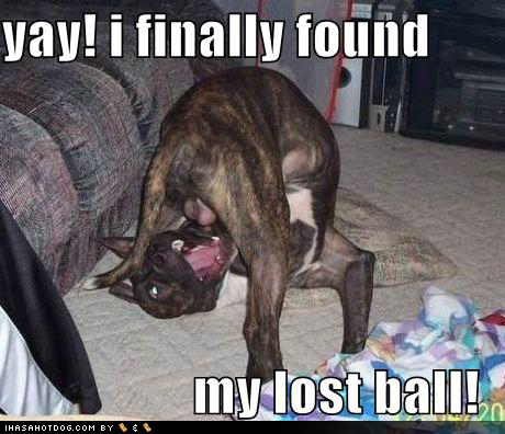 funny-dog-pictures-found-lost-ball
