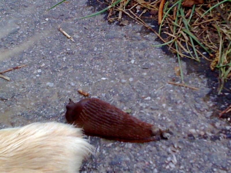 Paw_and_Slug