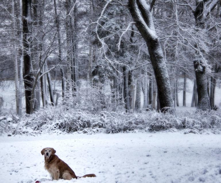 Snow and O