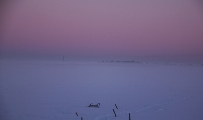 Pink, purple, winter