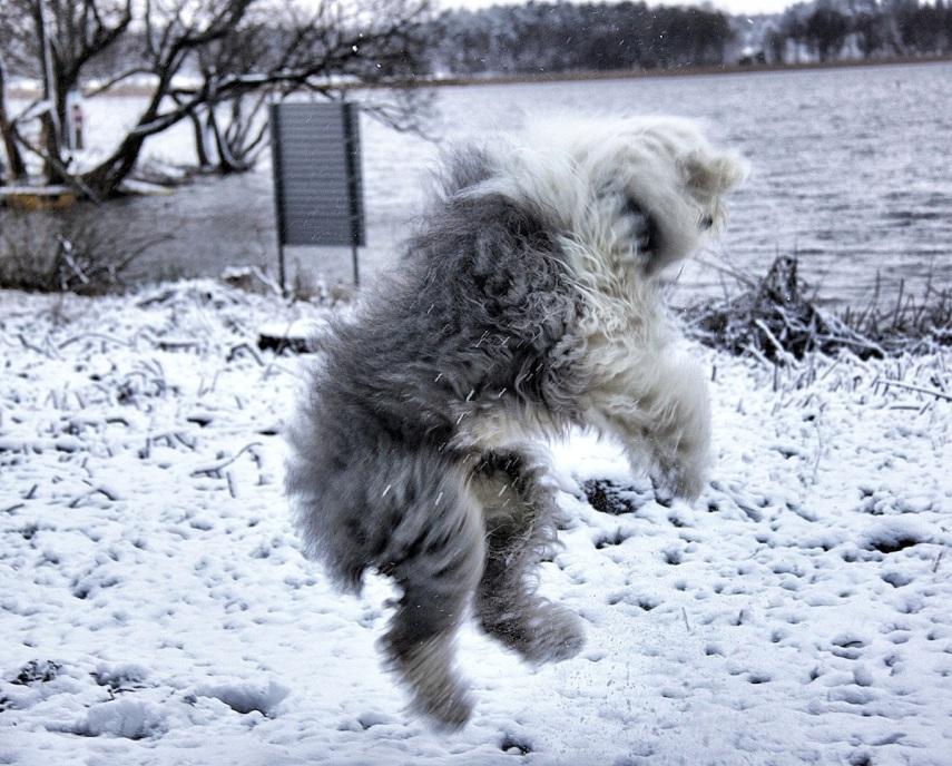 Totte - big jump