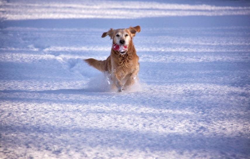 Running in snow copy