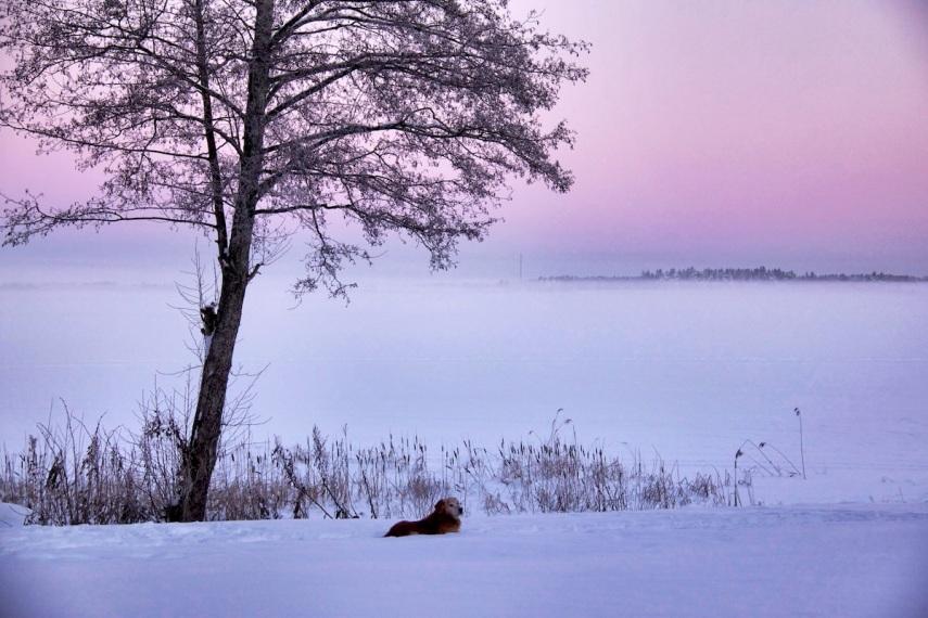 Sunrise dog