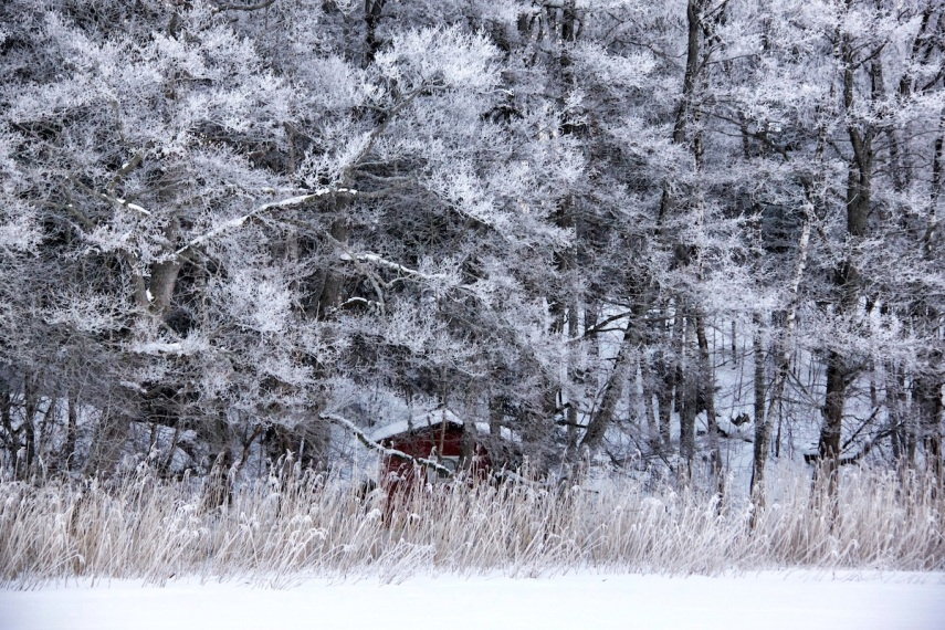 Hoar frost - red house copy