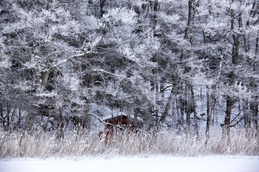Hoar frost - red house copy