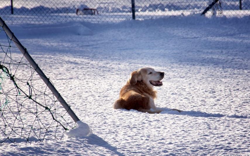 Smiling in snow copy