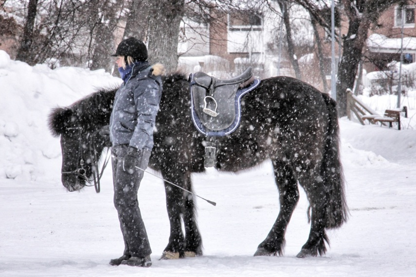 Snowy horse copy