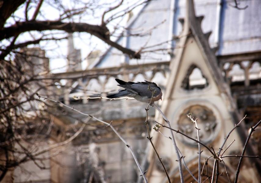 Bird ND
