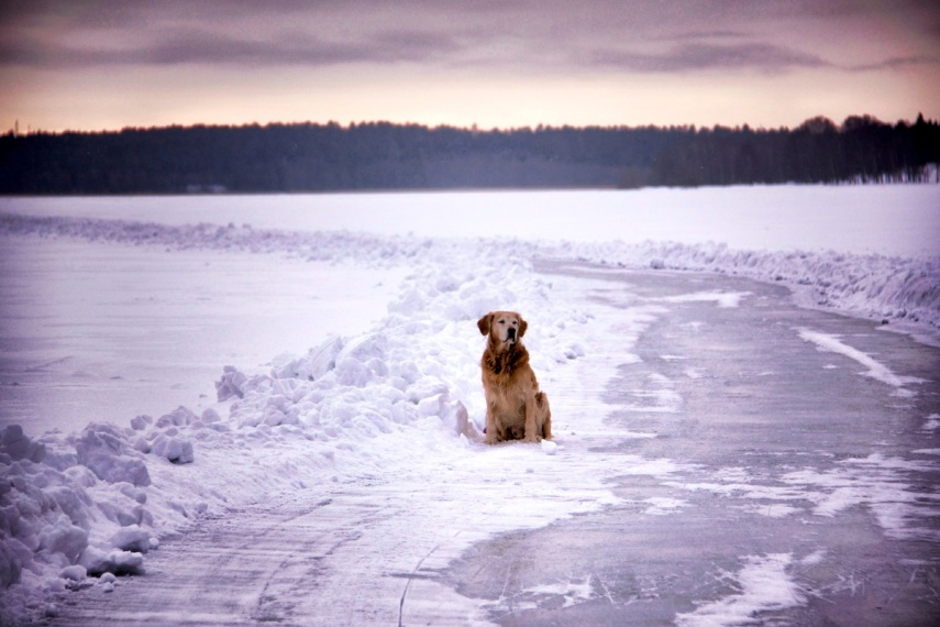 Oscar on ice