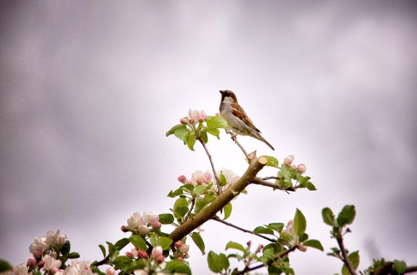Bird on blossom