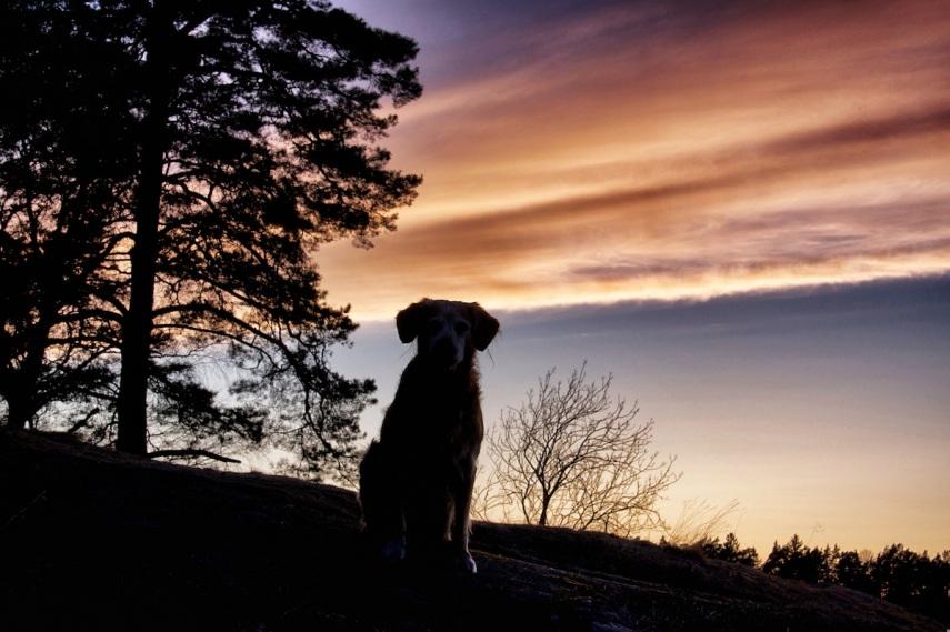 Oscar - sunset