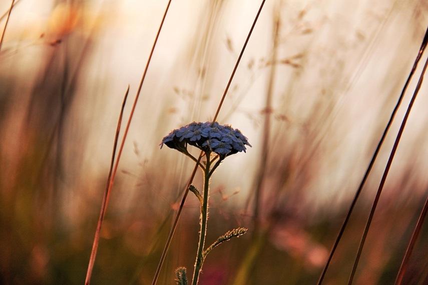 Lovely flower copy