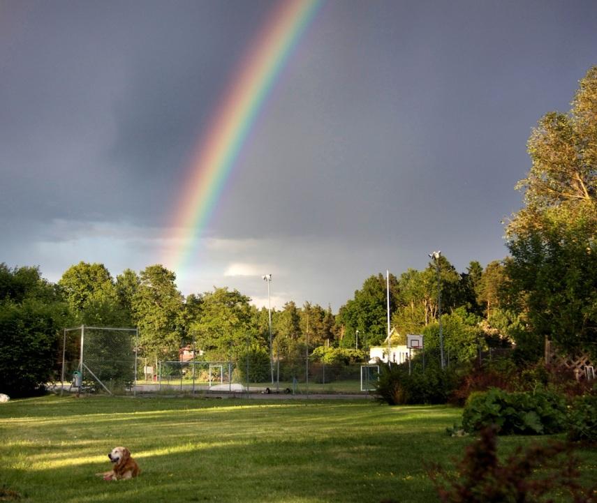 Rainbow-Oscar