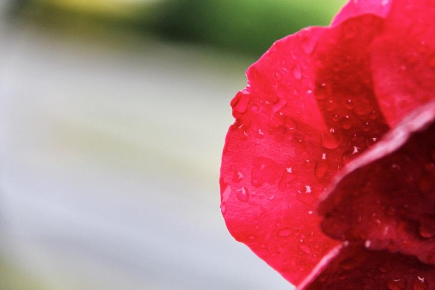 one petal copy