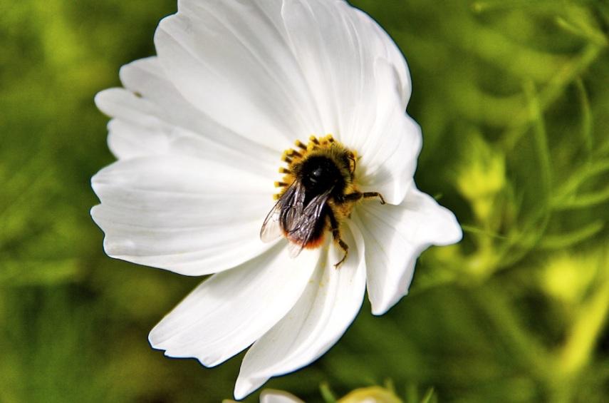Bee-utiful