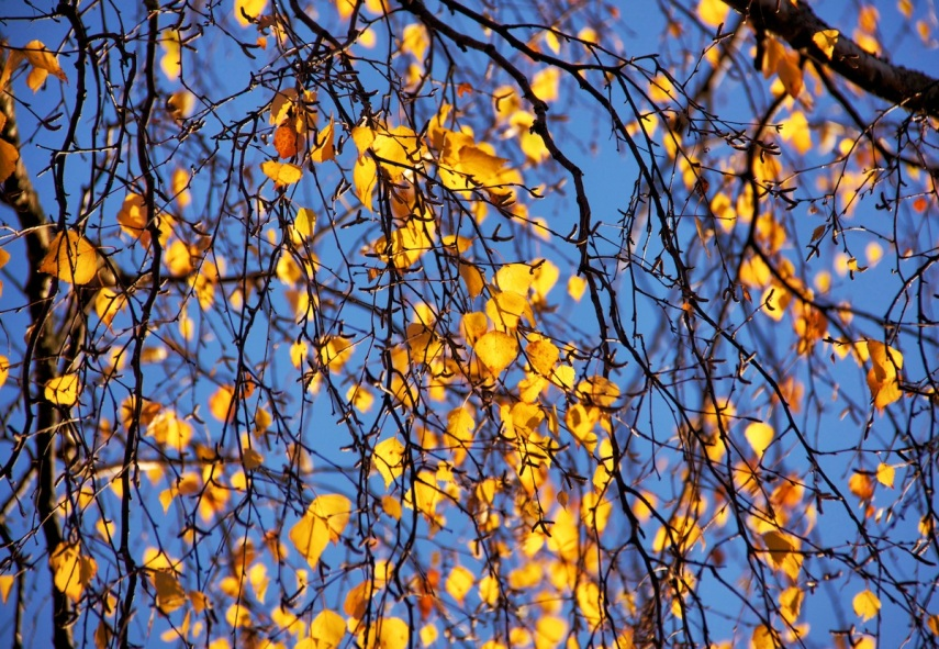 Luminous leaves