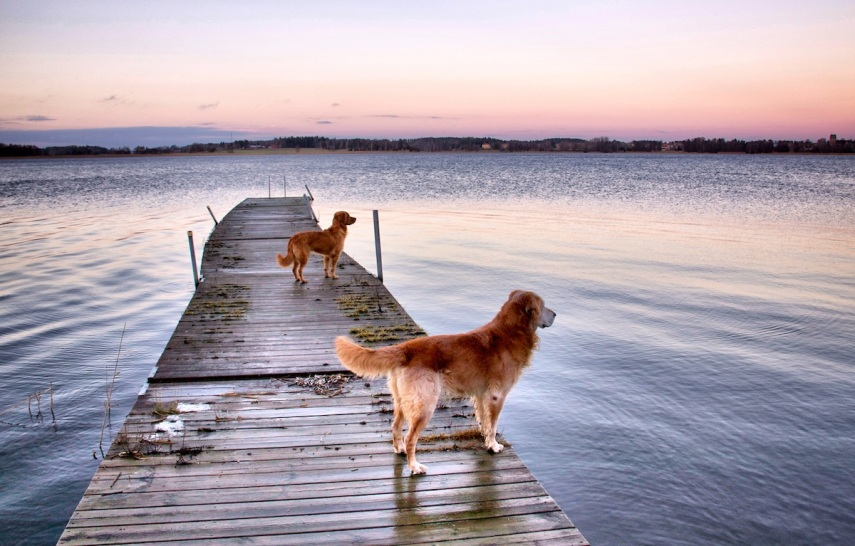 Dogs - -sunset copy