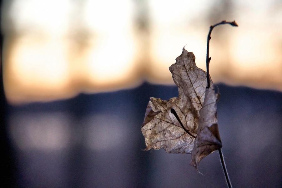 Old leaf copy