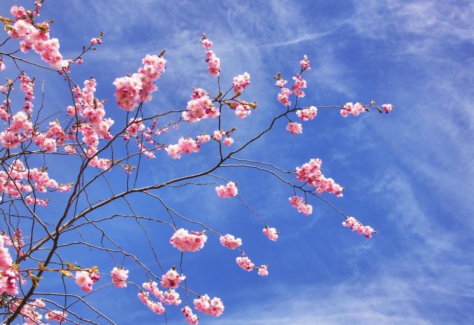Cherry sky copy