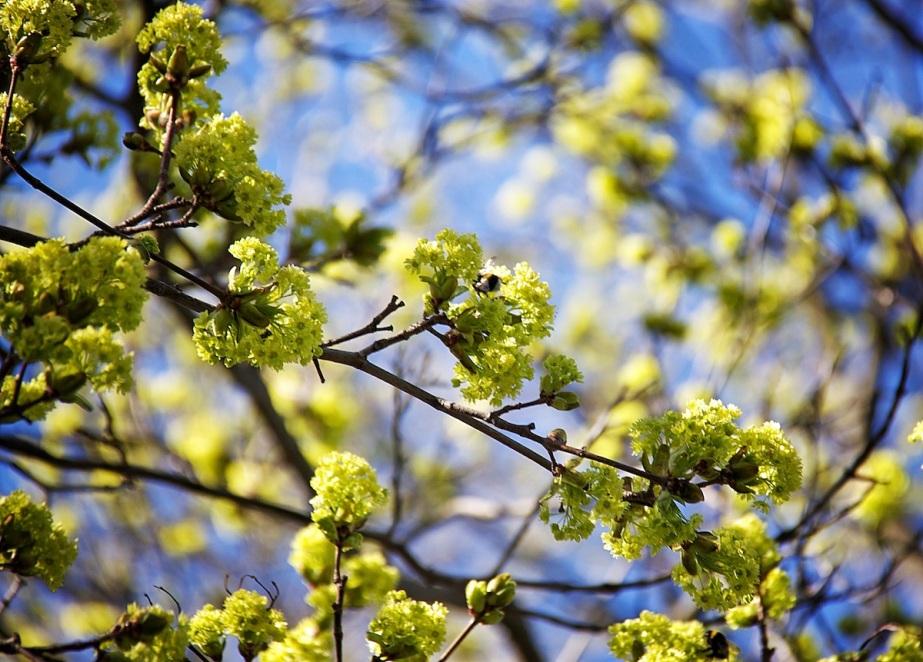 Humming tree