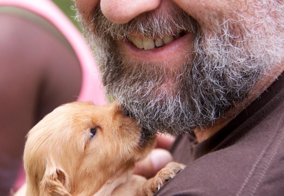 Beard and pup