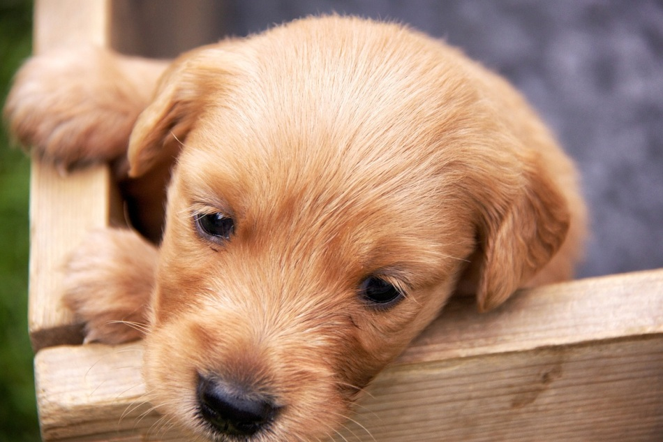 Puppy face copy