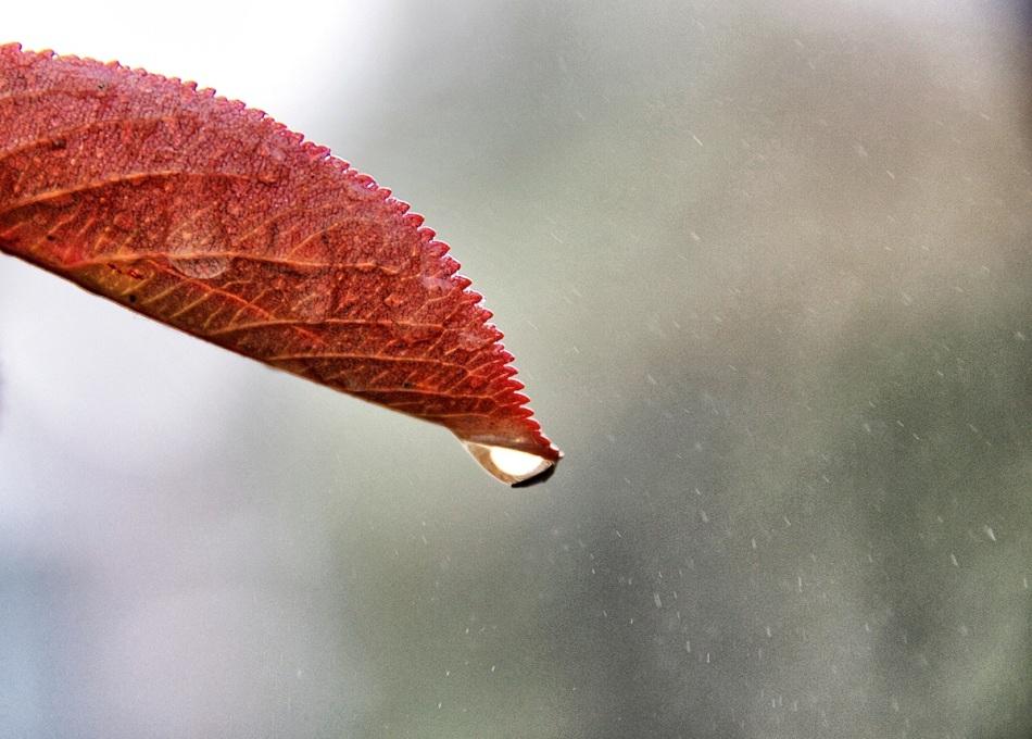 Rain copy