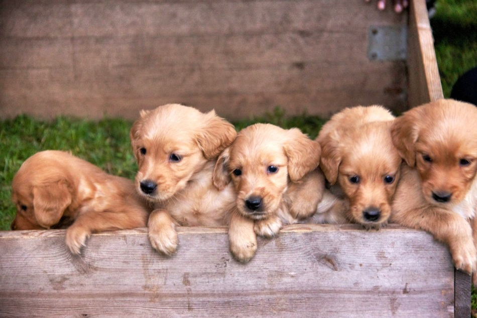 Pups in a row