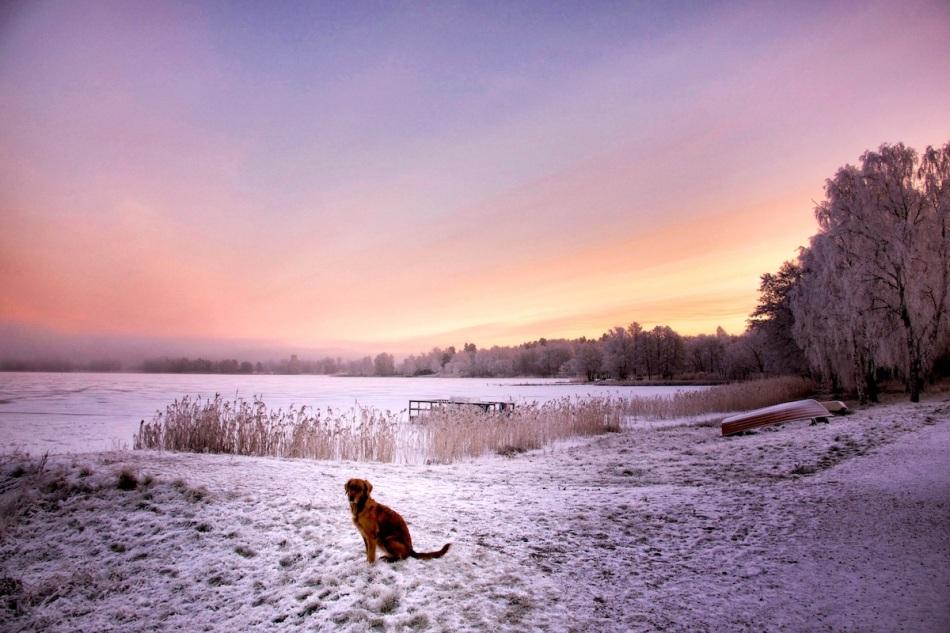Hoar frost dawn