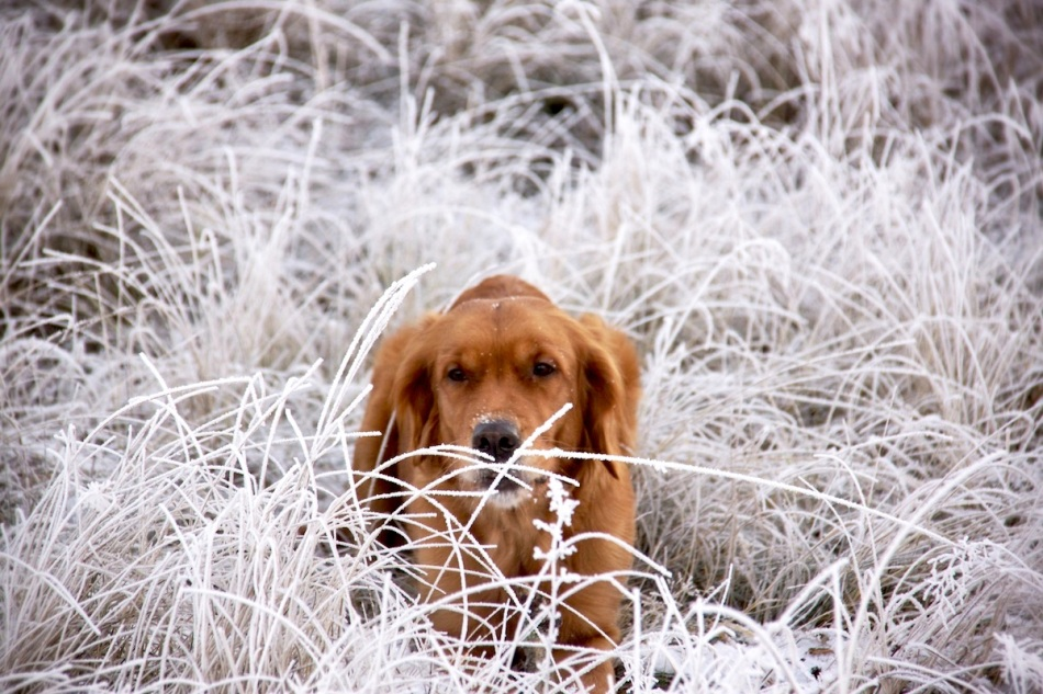 Ruby in frost copy