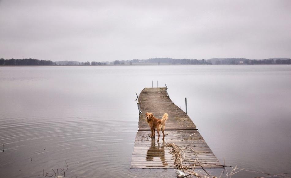 Simson jetty