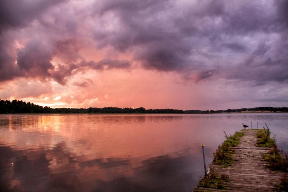 Goose+sunset
