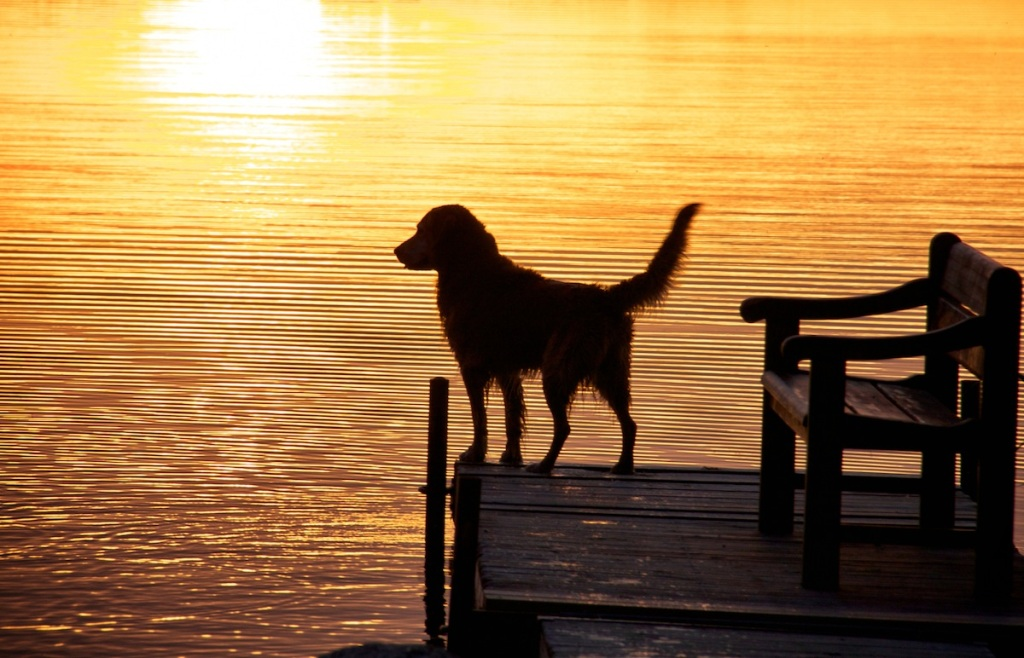 Glowing sunset dog copy