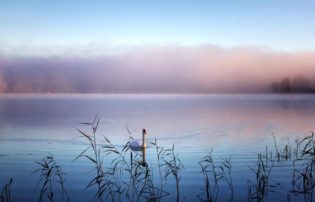 Swan in clouds