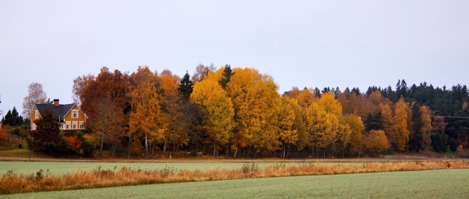 Leafy scene.jpg
