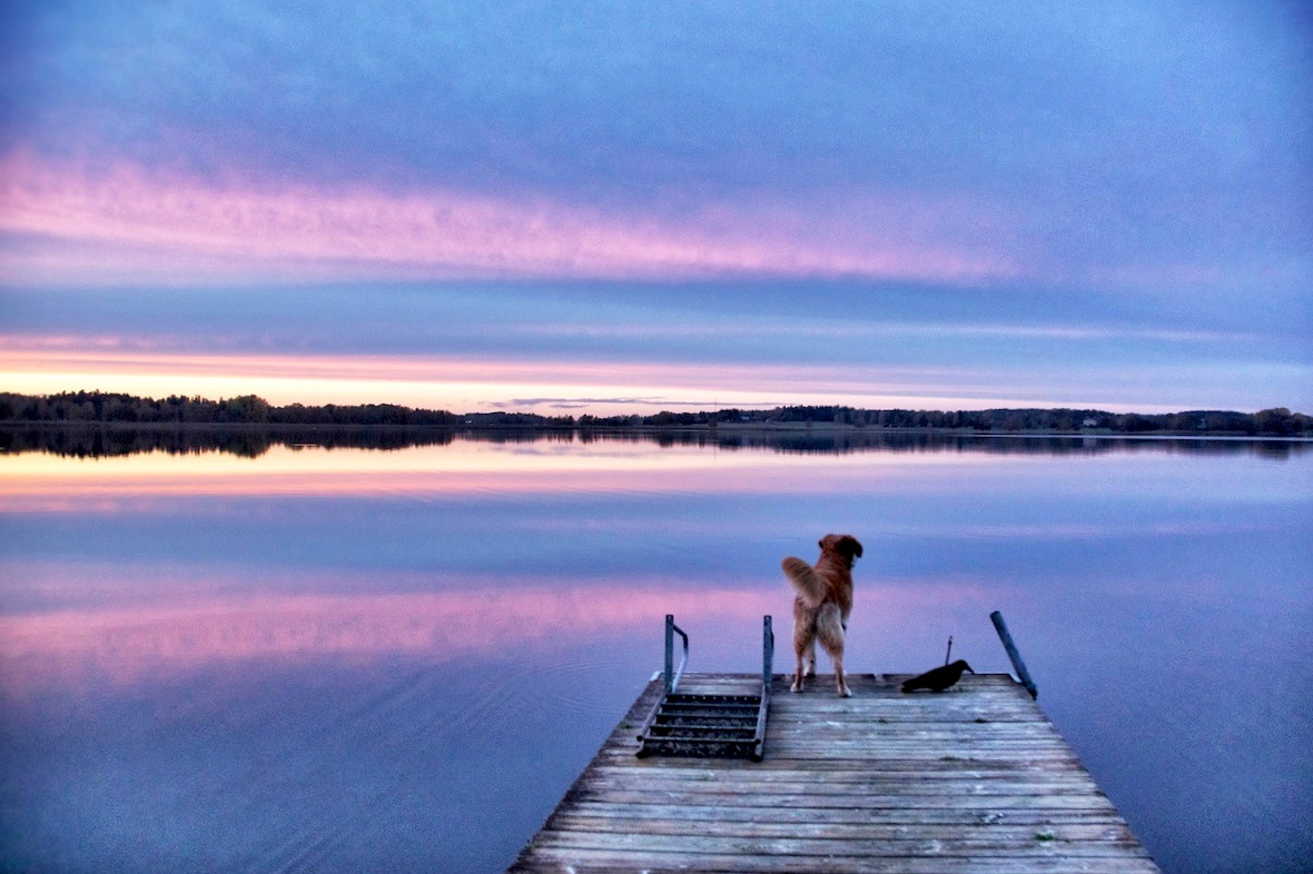 Oscar on jetty.jpg