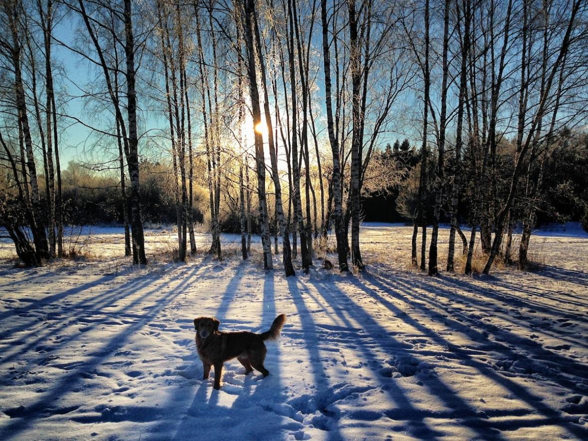 Brrr with dog.jpg