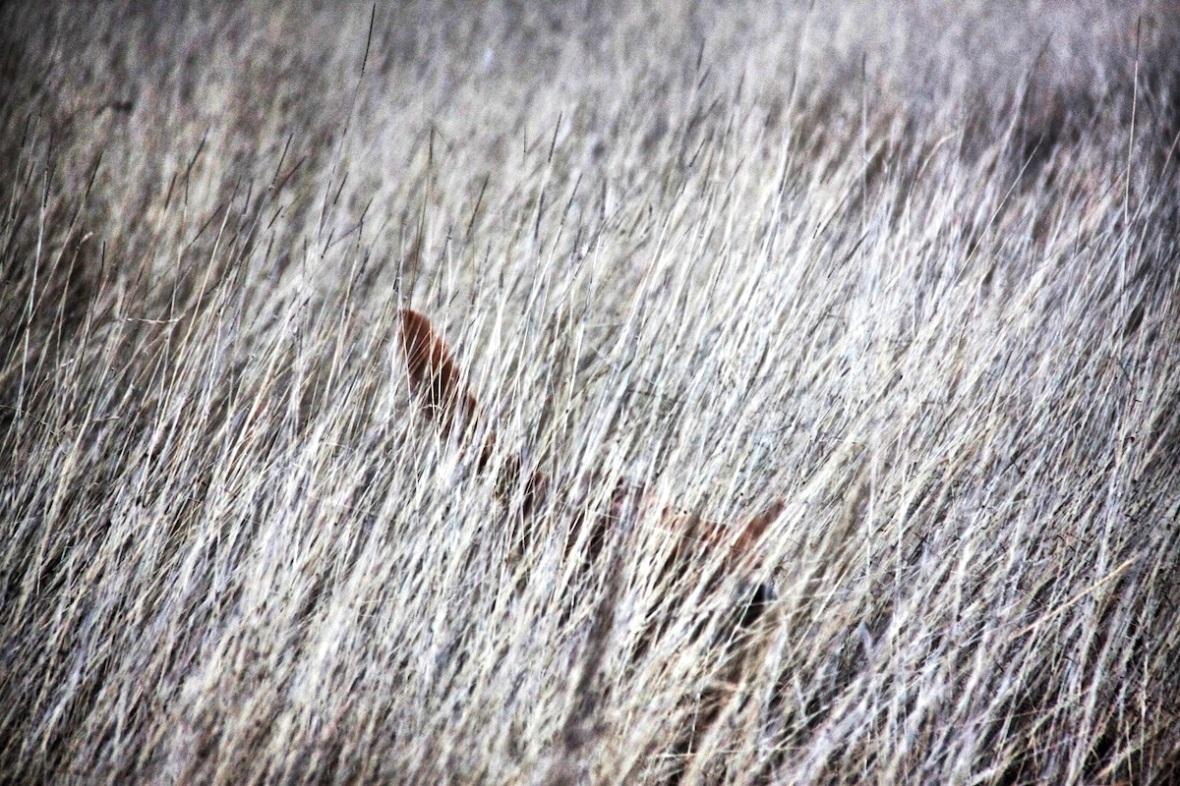 Dogs in long grass.jpg