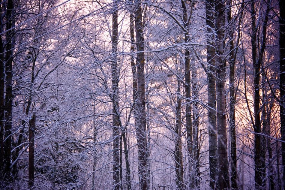 Dawn trees.jpg