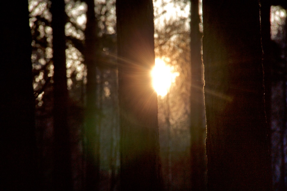 Peeking sun.jpg