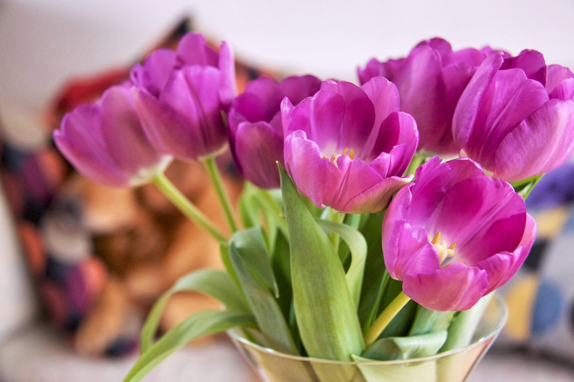 Tulips with dog.jpg