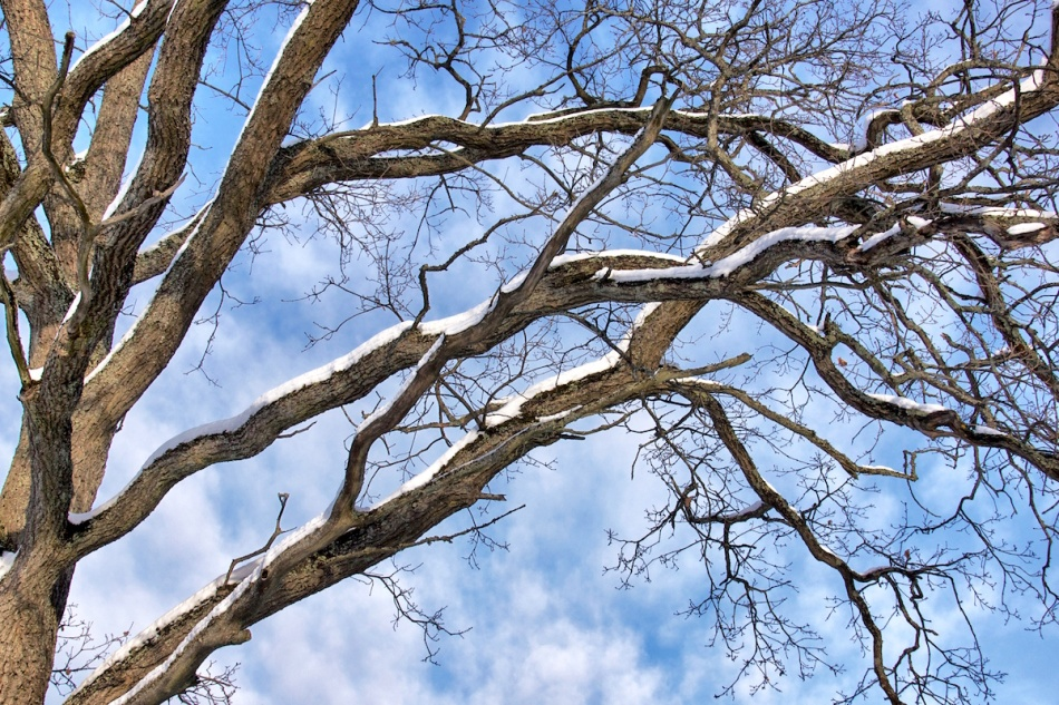 Branching out.jpg