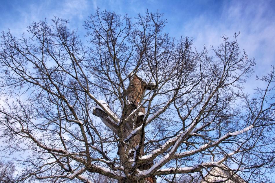 Tree branches.jpg