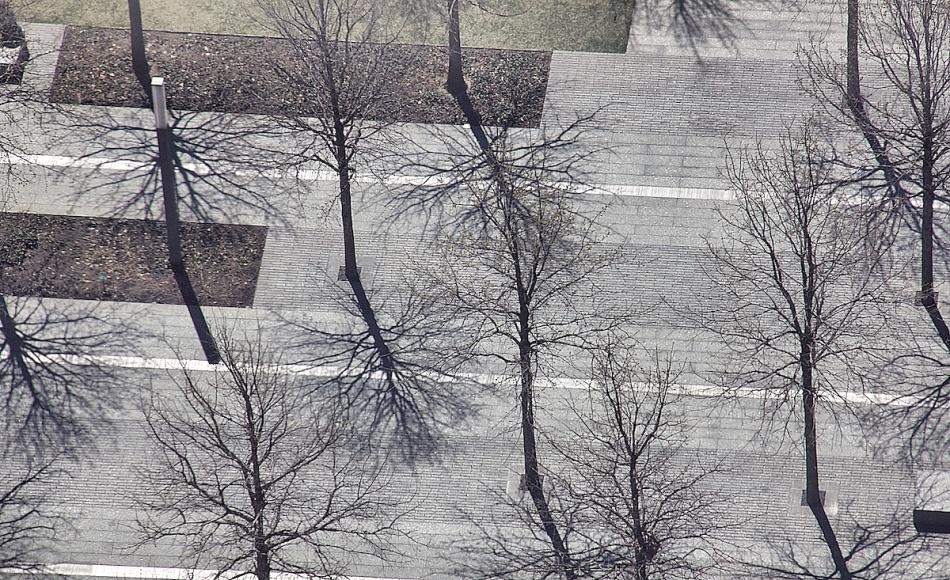 Trees and their shadows.jpg