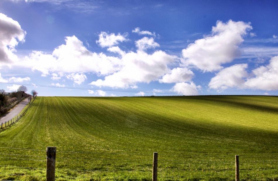 Emerald field.jpg