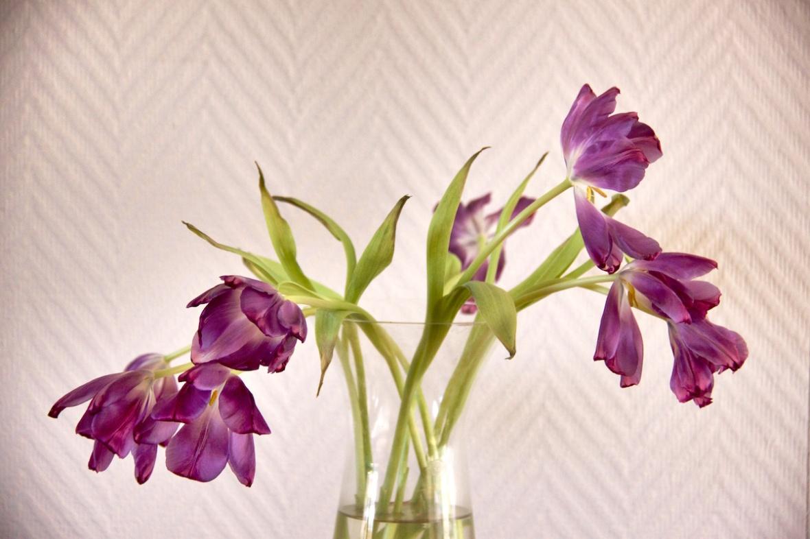 Purple wilting.jpg